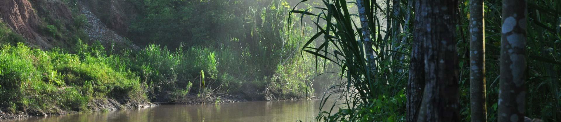 Het Amazonegebied
