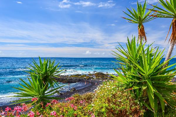 Green tropical plants on beach in Puerto de la Cruz, Tenerife, Canary Islands, Spain_shutterstock_241485676_klein