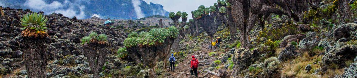 Kilimandscharo Trekking Tansania_shutterstock_278193683