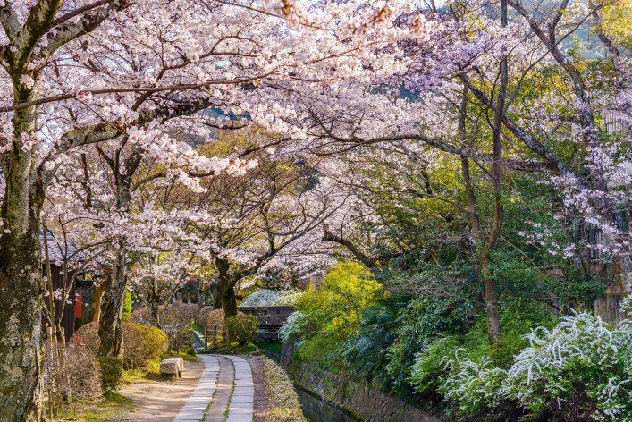 Kyoto Japan Philosophenweg