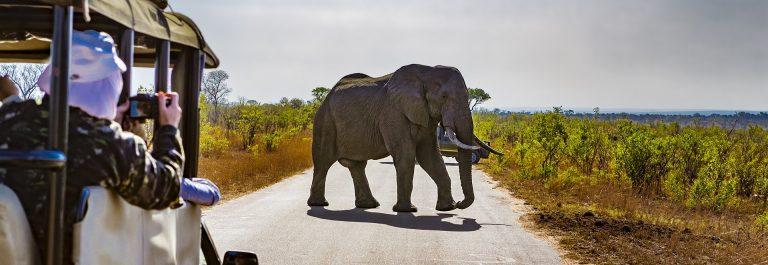 South Africa. Safari in Kruger National Park shutterstock_557534059