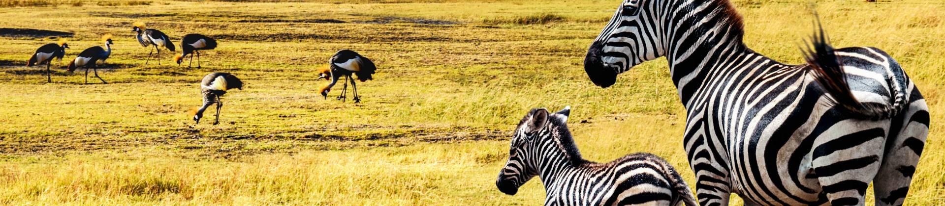 wilde dieren op de Serengeti