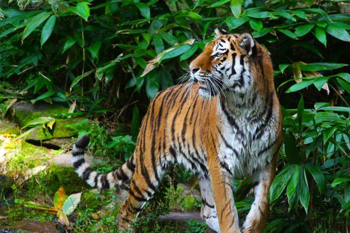 Nürnberg Tipps, Zoo