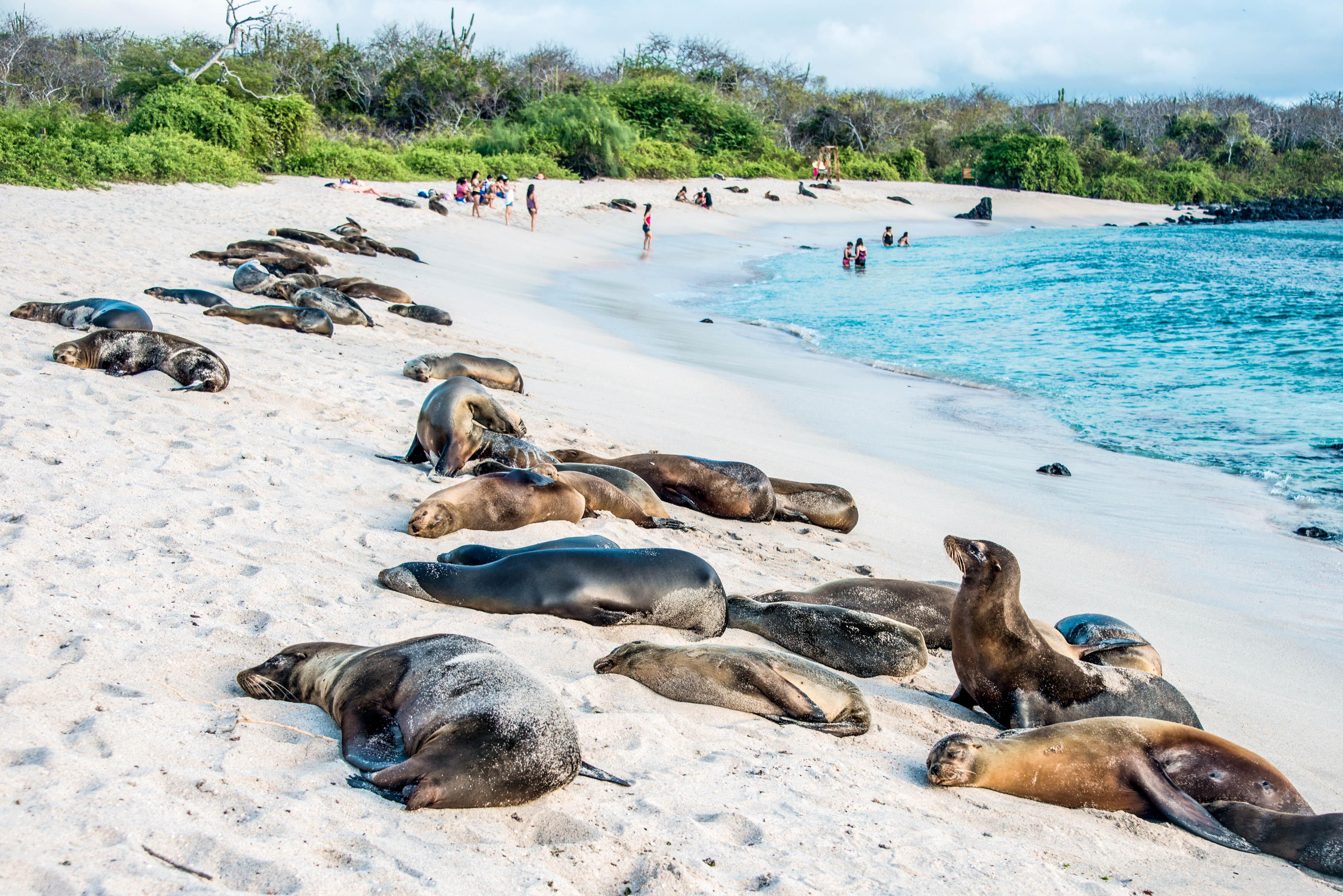 Beste reistijd Galapagos