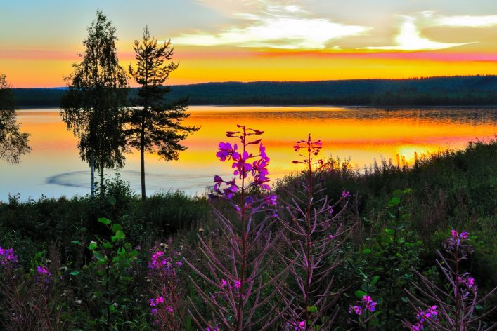 Night scene with fireweed
