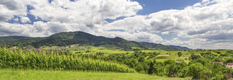 Panoramic image of a vineyard in Baden-Baden