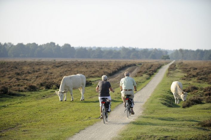 Senior couple cycling in nature
