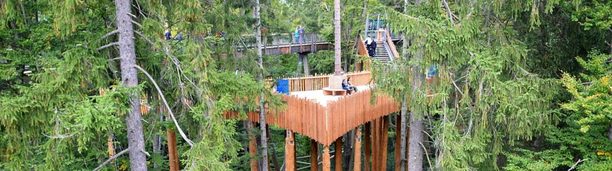 Erlebnis Akademie AGBaumwipfelpfad Bayerischer Wald