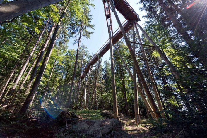 Erlebnis Akademie AGBauwipfelpfad Bayerischer Wald