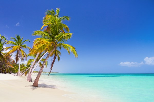 Punta_Cana_DomRep_Beach_Palme_iS-515073340_1920x420