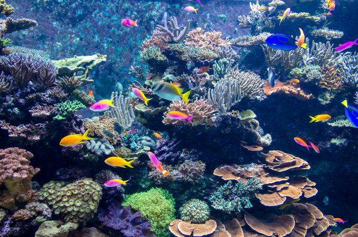 Absurde Dinge an Flughäfen - Aquarium
