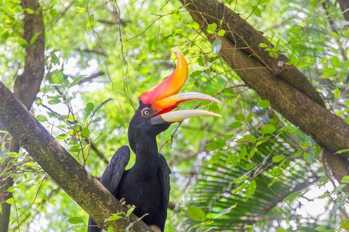 Kuala Lumpur Tipps, Bord Park, Nashornvogel