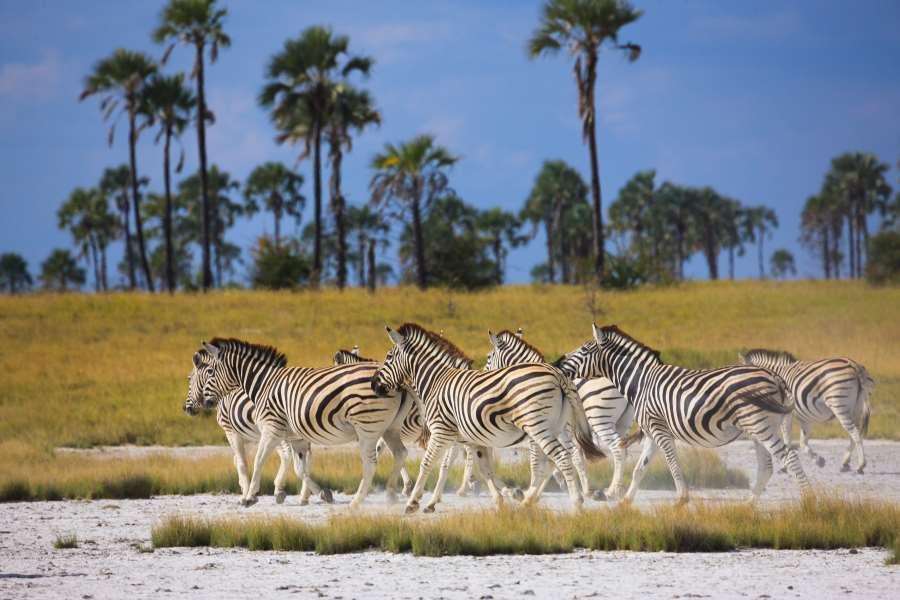 Makgadikgadi Pans National Park - Botswana