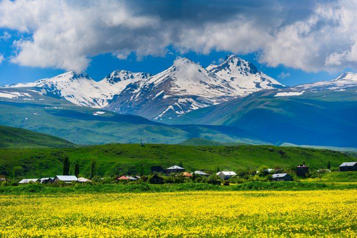 Der Berg Aragats in Armenien mit einer gelben Blumenwiese im Vordergrund.
