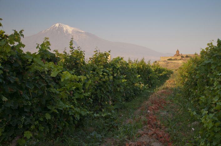 Das Kloster Chor Virap liegt inmitten von Weinfeldern und bietet ein atemberaubendes Panorama auf den Berg Ararat.