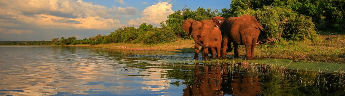 Panorama Nature Elephants shutterstock_430522069