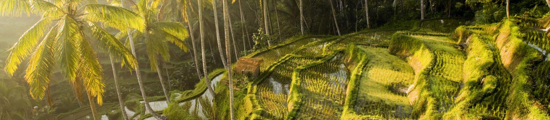 Rijstterassen op Bali