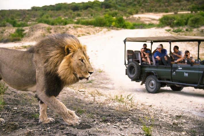 Wildlife Safari im Krüger Nationalpark