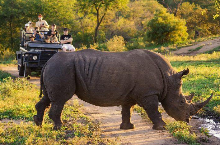 Südafrika Wildlife. Auf Pirschfahrt mit Nashorn