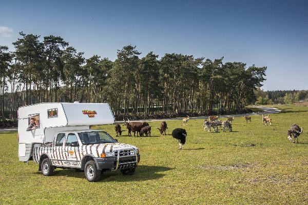 Ranger-Lodge mit Tieren im Hintergrund im Serengeti-Park