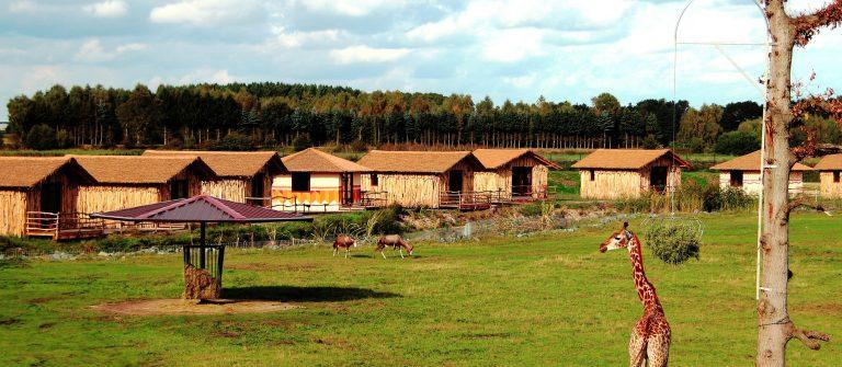 SERENGETI-PARK_LODGES_Masai-Mara-Lodges_Tieranlage