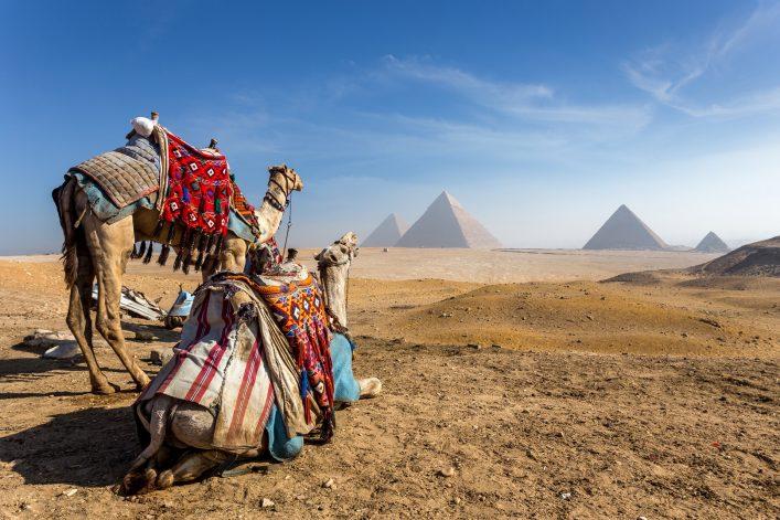 Kamele vor den Pyramiden von Gizeh in Ägypten