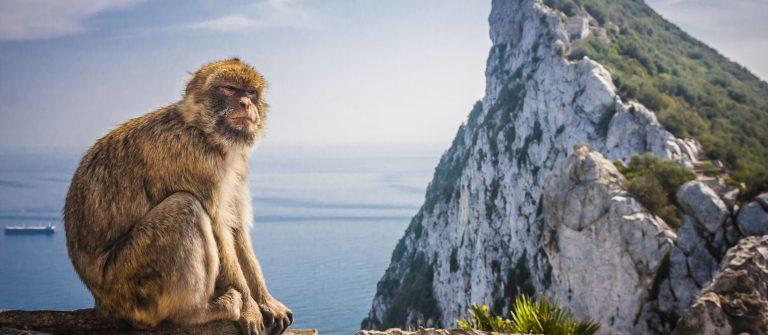 Monkey in Gibraltar shutterstock_161855363
