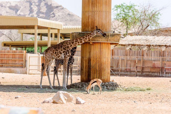 Al Ain Abu Dhabi Zoo