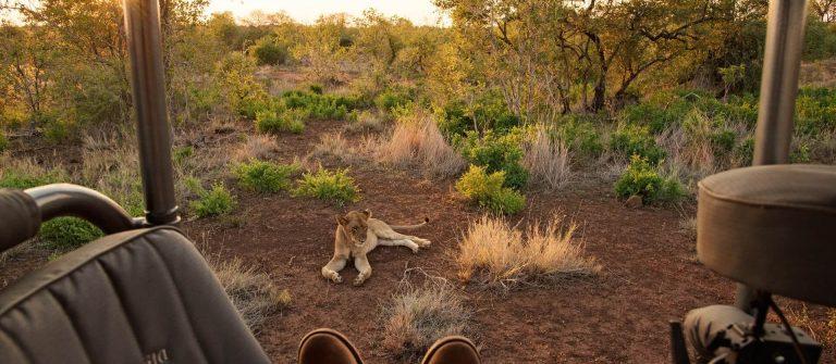 Singita_Lion_Kruger_RET_RGB