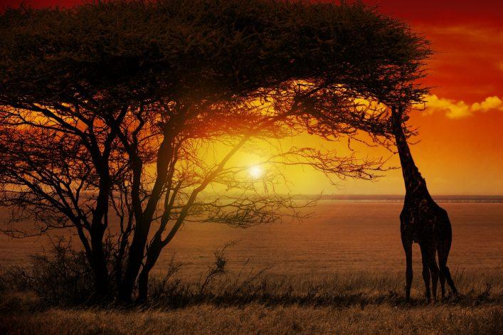 Südafrika bietet die schönsten und farbintensivsten Sonnenuntergänge